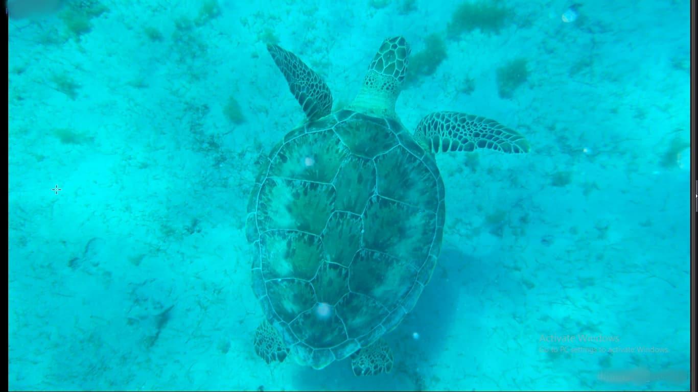 عکس لاکپشت در ابتدا